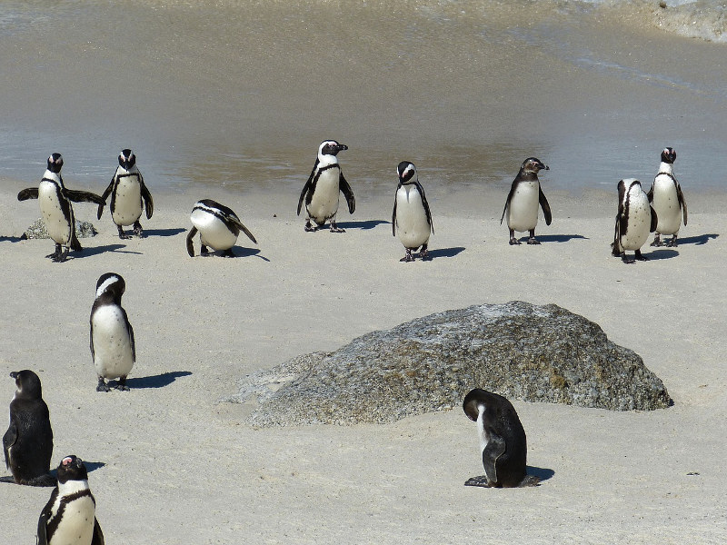 penguins-cape-town