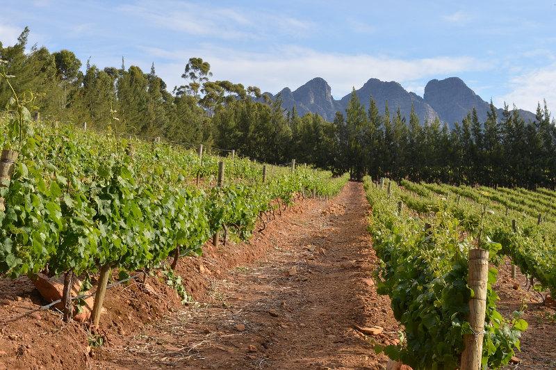 vineyard-cape-town